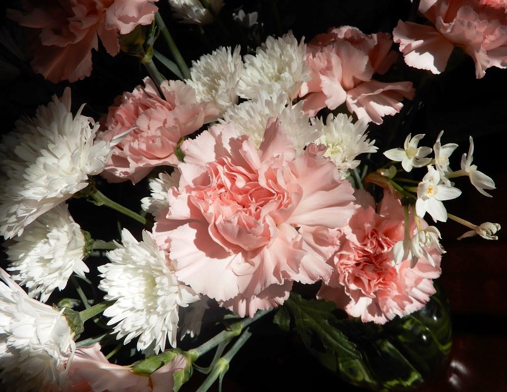 Flowers in winter light
