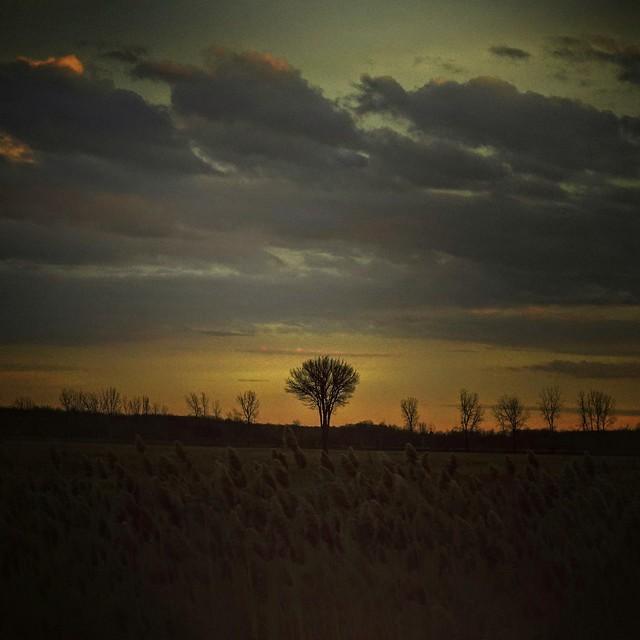 Lonely_Tree_2020_21_16