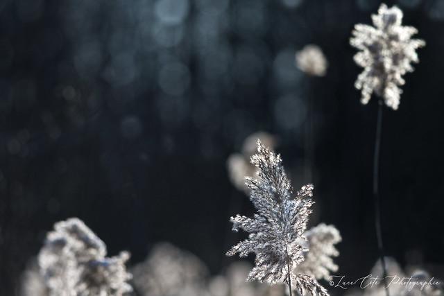 Winter season (In Explore)