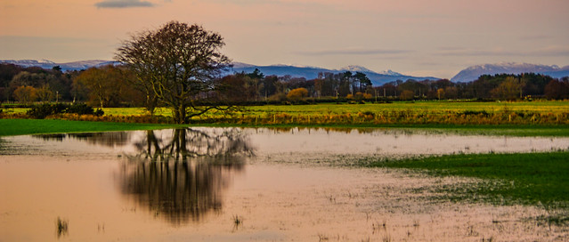 Some People See A Flooded Field