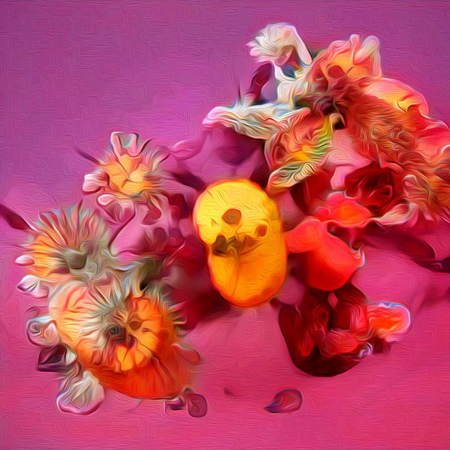 These Are Not Flowers - featured 1620px