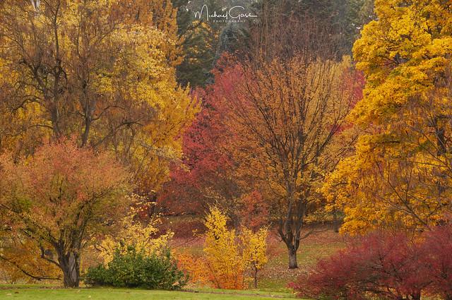 Finch Arboretum Autumn Colors