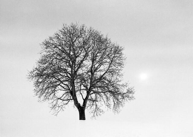 Astrum Tree  (Retina IIIC / Astrum FN-64)