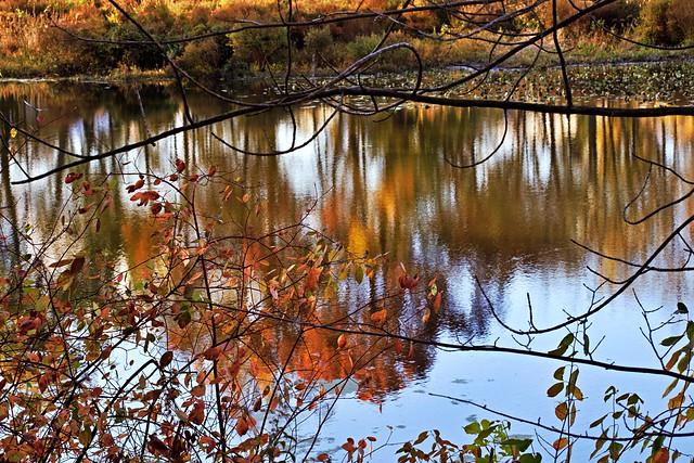 Autumn Awesomeness #43