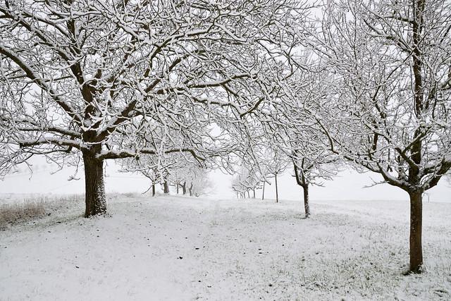 Première blancheur hivernale