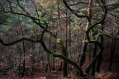 Charakter-Baum