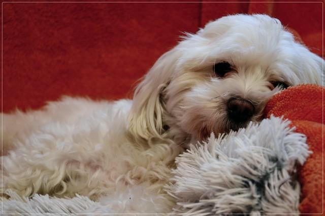 12/12 Fela likes comfortable places... :)