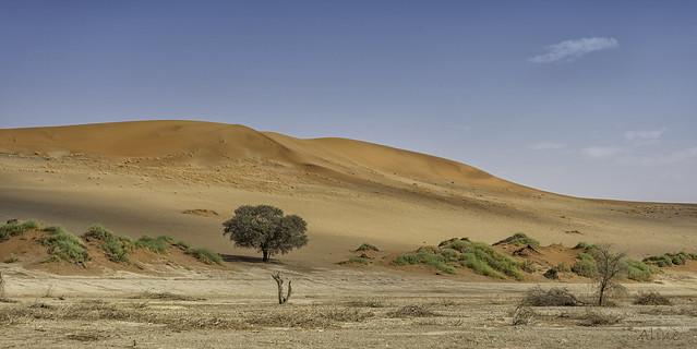 the tree in the desert