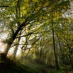 Árbores encendendo e apagando as luces do bosque.