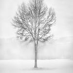 Árbores resistindo ao tempo, escrebendo cos brazos extendidos nos lenzos brancos da neve.