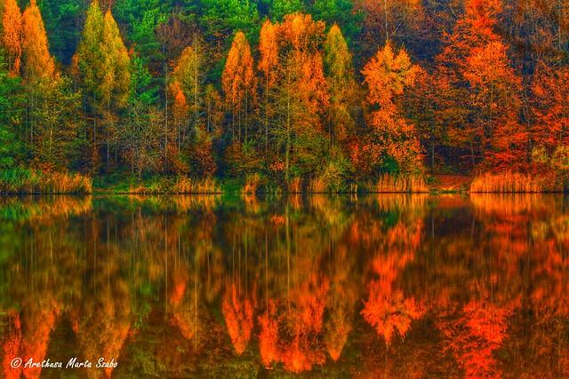 Always love to capture the ephemeral spectacle of autumn colours - Őrség National Park Hungary