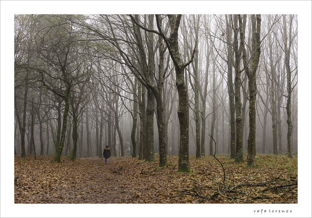 camiños de outono [Explored]