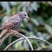 Garden Birds-11.jpg