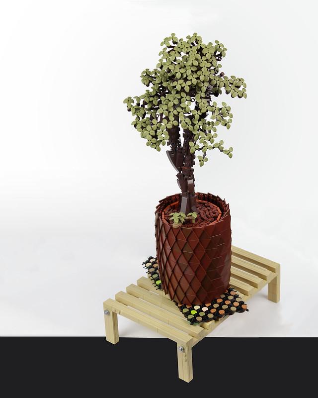 Bonsai - Speedbuild