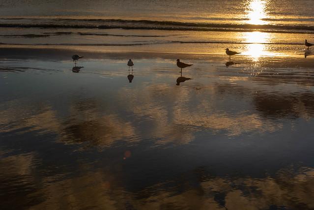 Shorebird Heaven