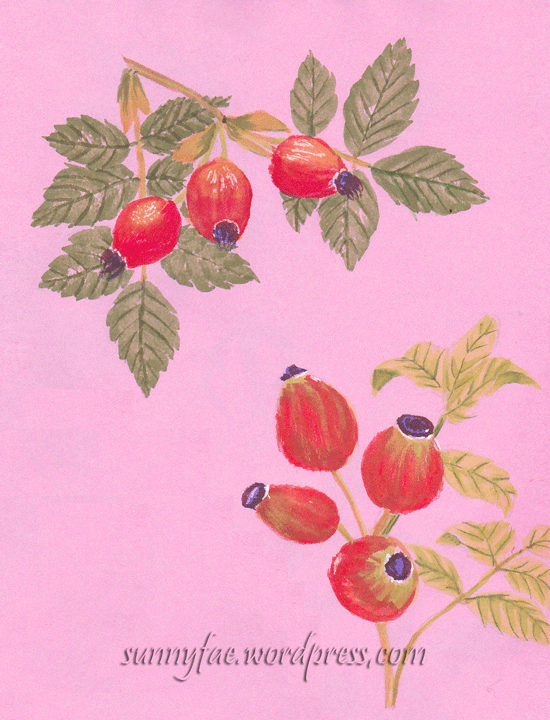 dog rose hips painted with  gouache