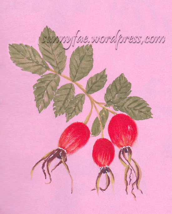 dog rose hip painted with  gouache