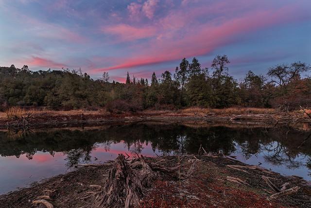 Black Swan Sunset