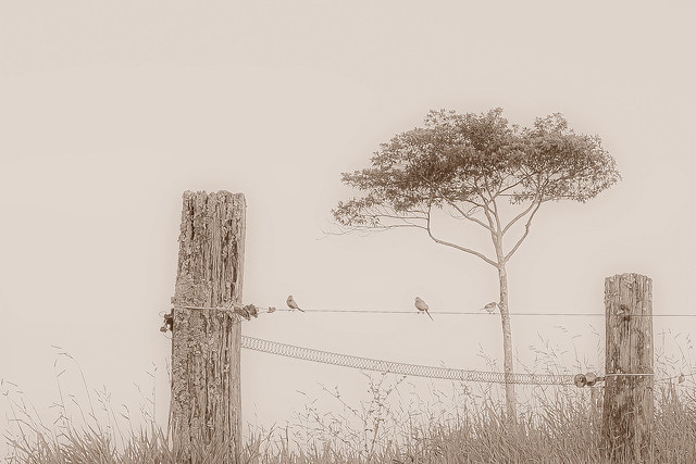 Birds on a wire 2