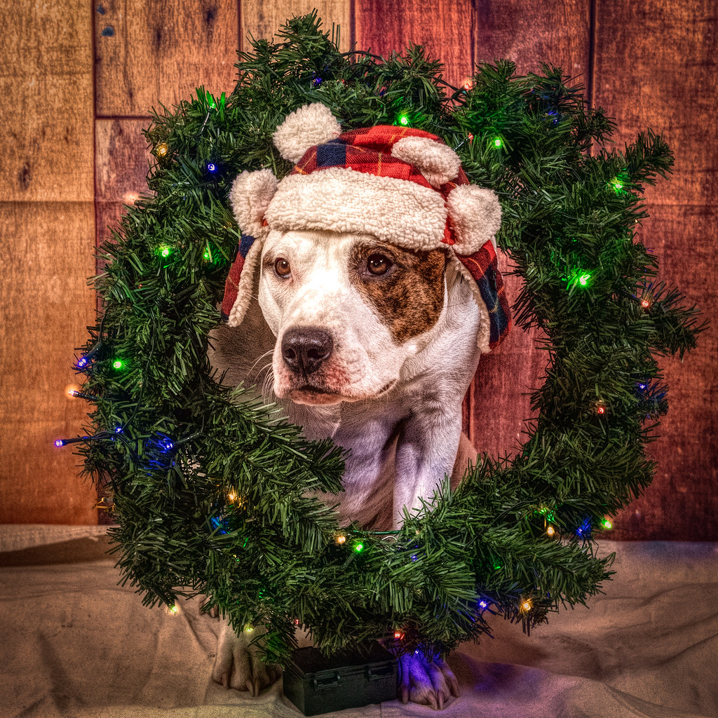 Puppy Wtih Christmas Wreath