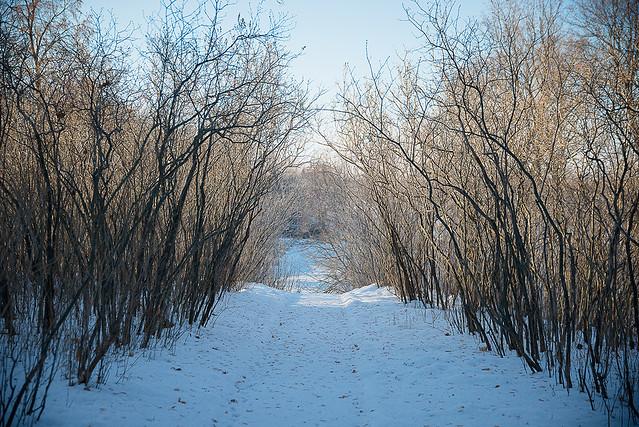 Декабрь в «Тарханах». Зимние виды. Фотограф: А. Семенов