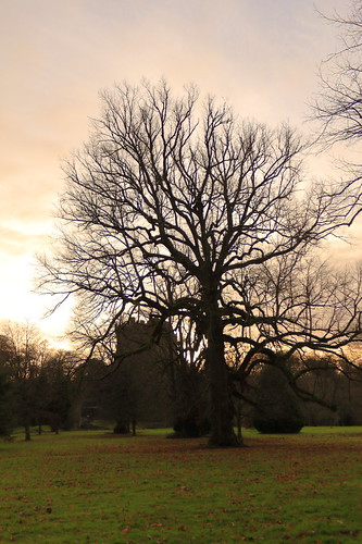 blarney ireland blarneycastle cocork tree castle winter sunset