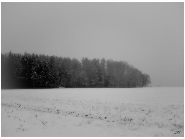 Snow fields #4