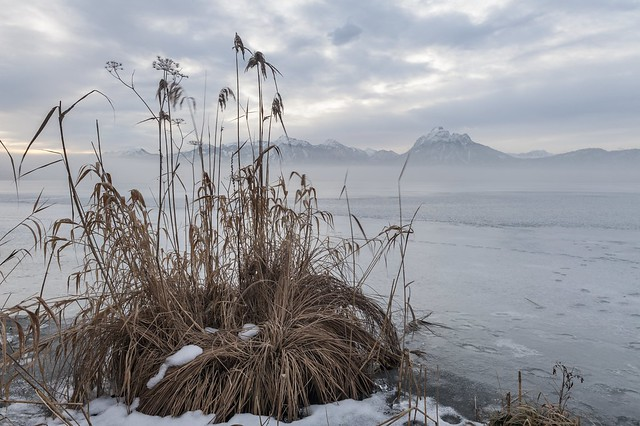 *Winter am Hopfensee II*