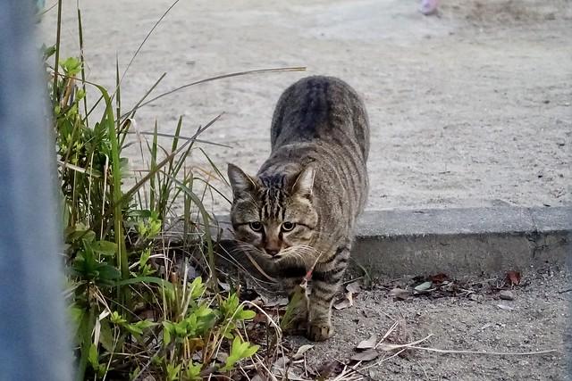 Today's Cat@2020−12−07