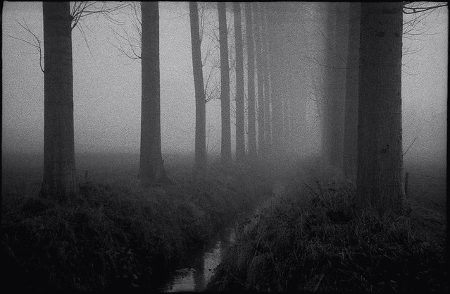 Ruisseau dans le brouillard