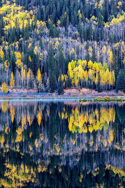 Aspens Reflected