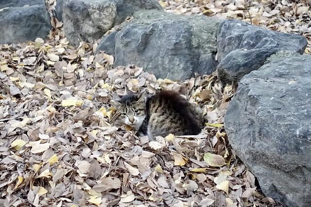 Today's Cat@2020−12−08