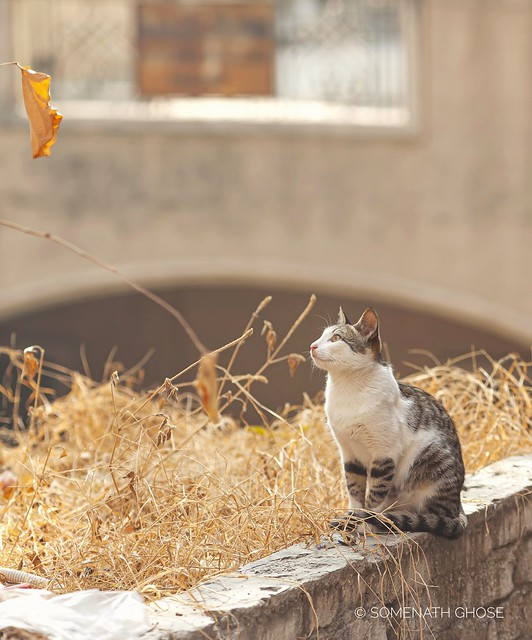 The Cat & the Leaf