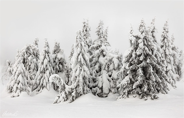 Quiet Winter, Norway