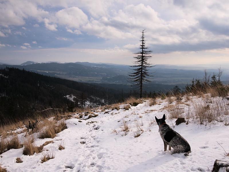 pies górach
