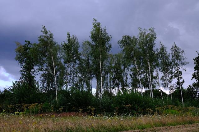 Trees Nieuw Eyckholt