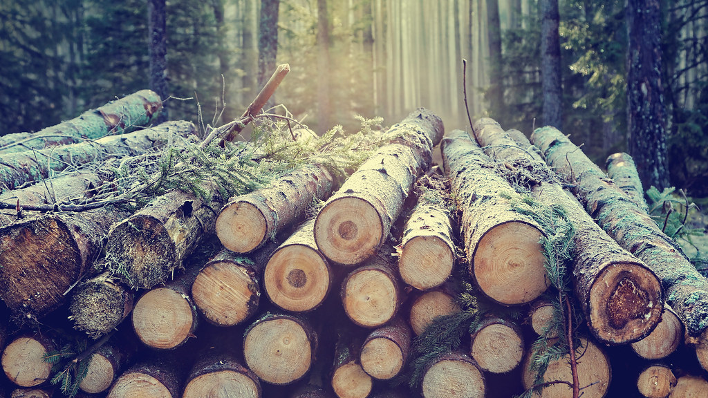 Stacked logs with forest in the background