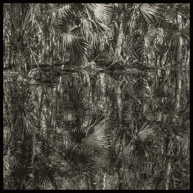 Hontoon Island #5 2020; Palm Swamp Abstract