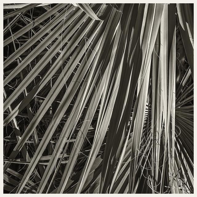 Hontoon Island #4 2020; Palm Leaf Abstract