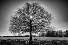 My Tree No. 1...