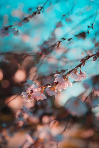 blur tree green texture nature leaves leaf pattern bokeh dew depth bloom fall