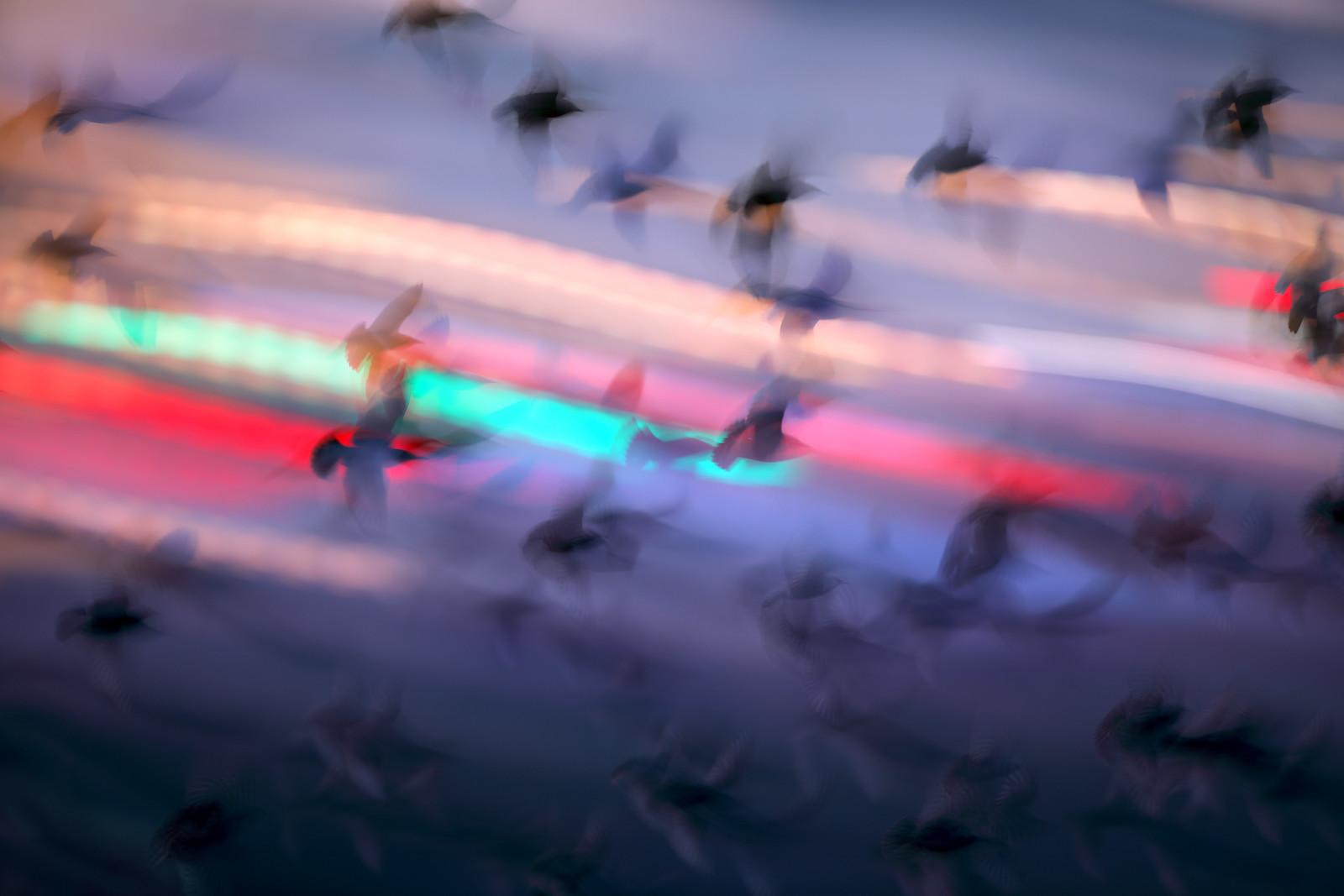 Starling Murmuration and Brighton Night Traffic