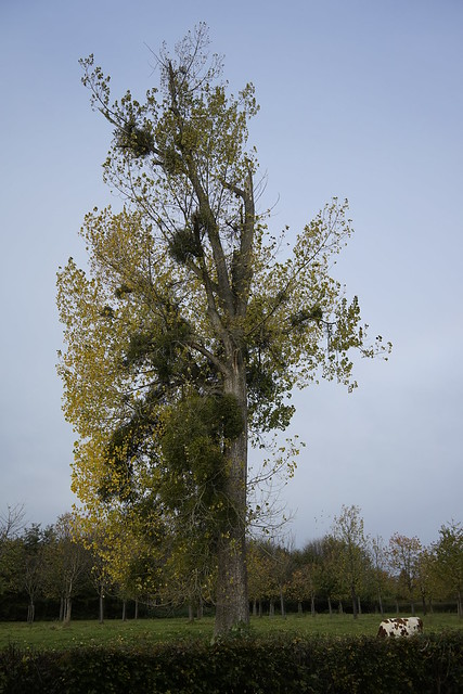 Tree, Heerlen Nieuw Eyckholt