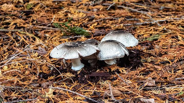 Mushrooms at Green River