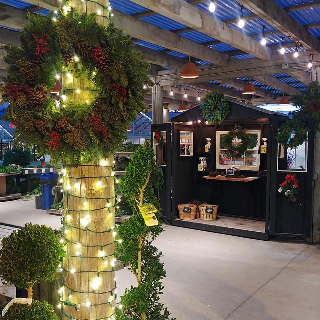 #shed #festive #christmas #display #evergreen #wreath #tree #garland #nursery #🎄