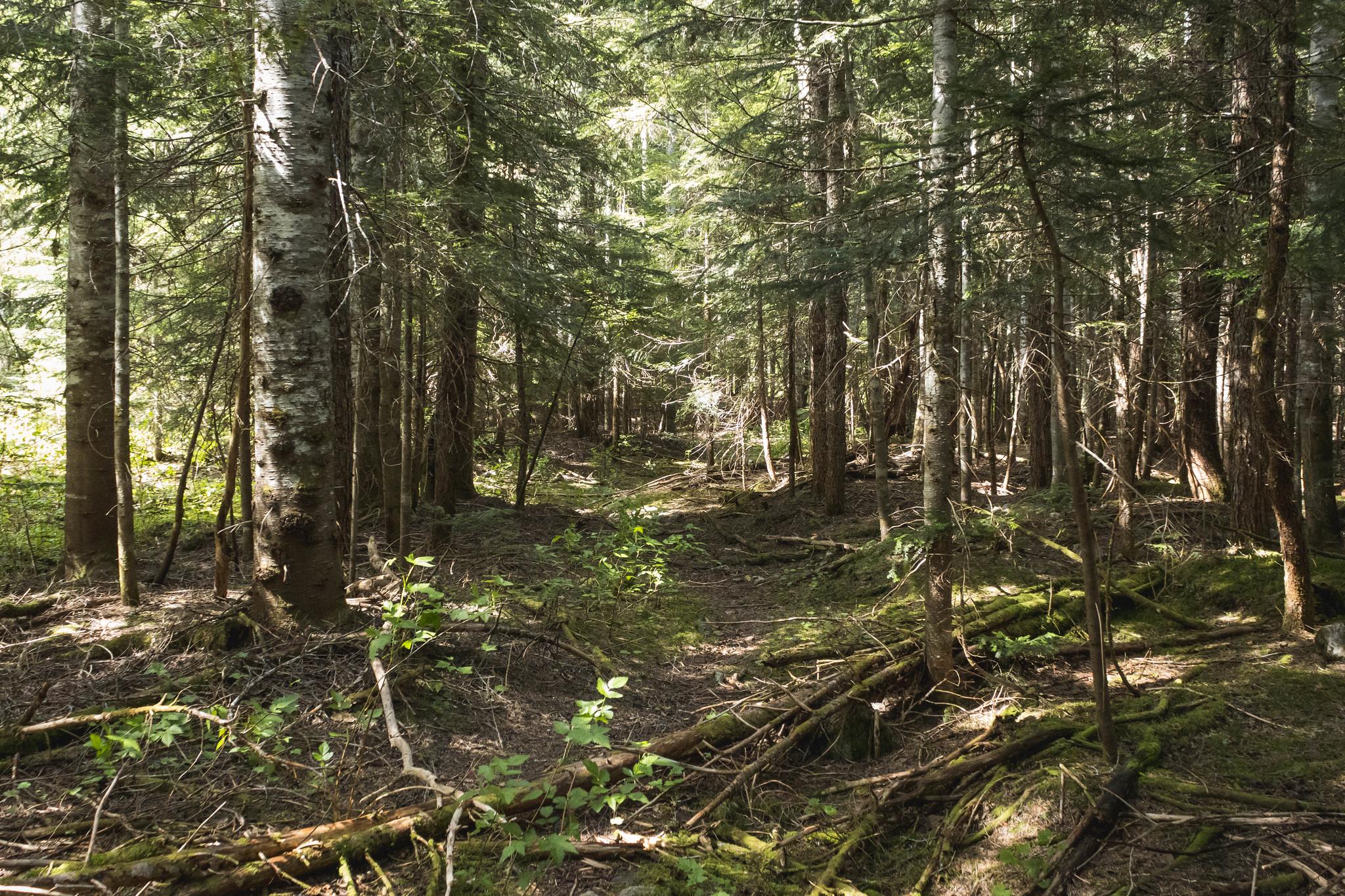 The start of Easy Ridge Trail