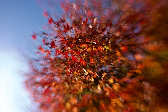 Alle Farben des Herbstes