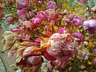 Realme 7i fleurs
