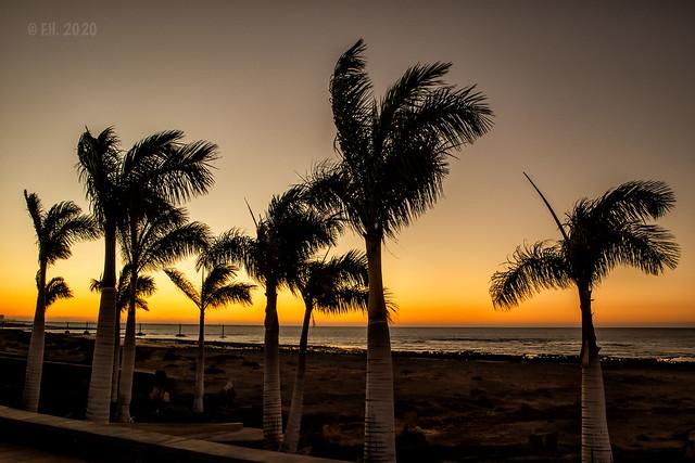 Happy palmtrees during sunrise , Lanzarote 2020