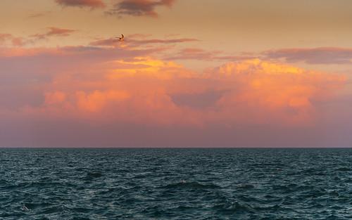 seascape landscape sunset bird clouds sky water nikon 24120 aransas bay texas fulton beach horizon sea